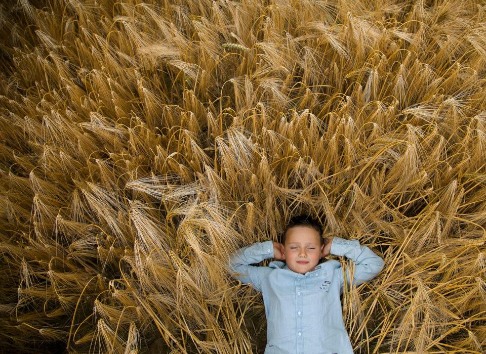 un garçon allongé dans un champs de blé