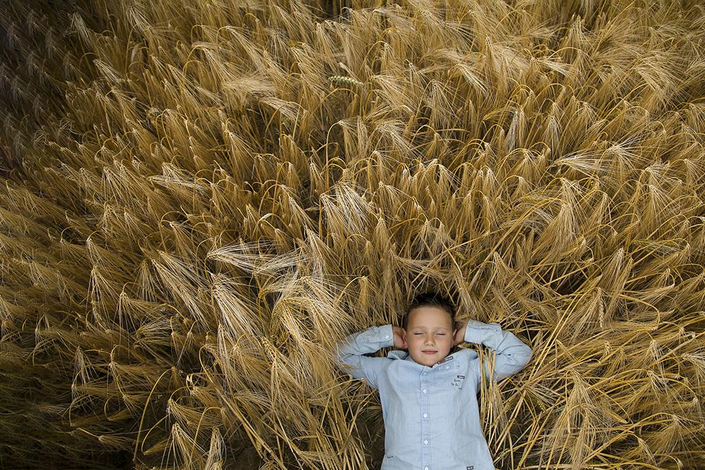 un petit garçon couché dans un champs de blé.